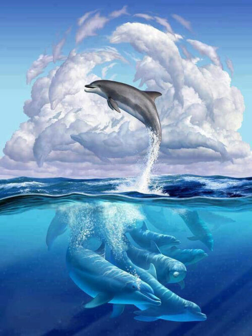 dolphin-illustration